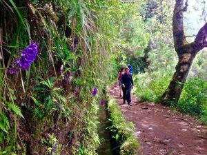 Orchidea di Madeira